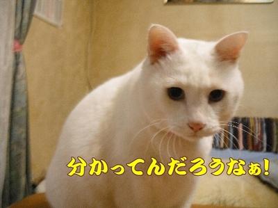 1お天気8.jpg