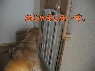 1さくら家04.jpg