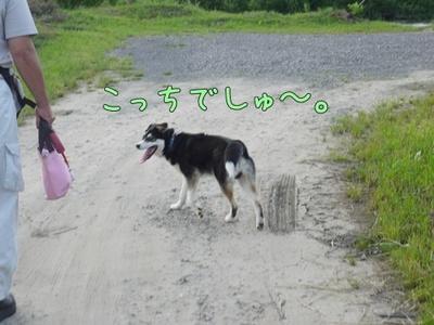 1プーちゃん08.jpg