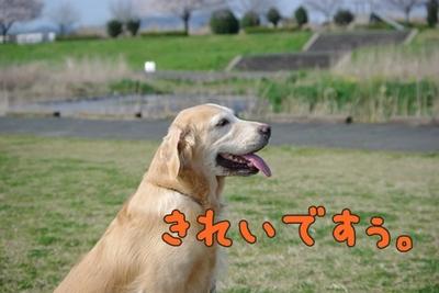 1永野川05.jpg