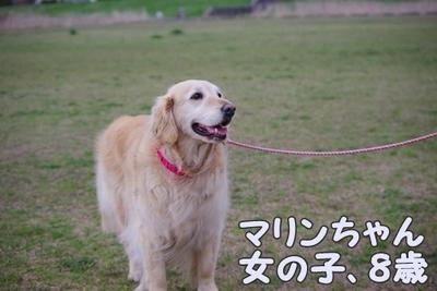 1永野川11.jpg