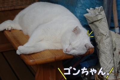 1永野川14.jpg