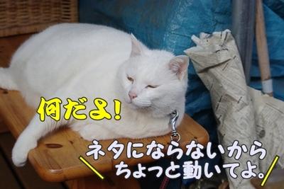 1永野川15.jpg
