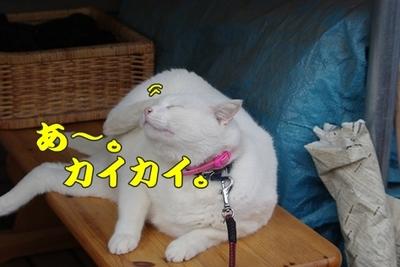 1永野川16.jpg