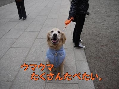 1大前神社12.jpg