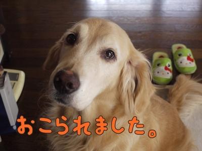 1抜糸06.jpg