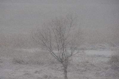 1雪04.jpg