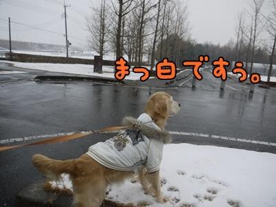 1雪遊び01.jpg