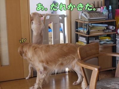 2さくら家01.jpg