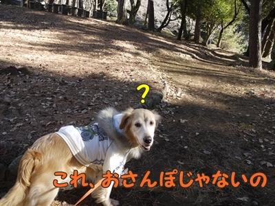 1太鼓橋04.jpg