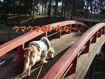 1太鼓橋09.jpg