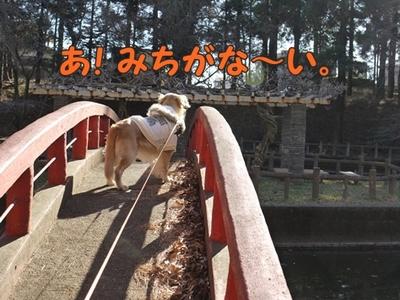 1太鼓橋10.jpg