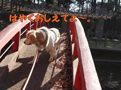 1太鼓橋11.jpg