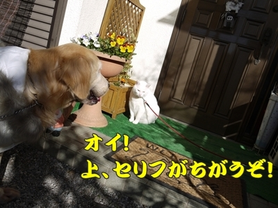 1太鼓橋13.jpg