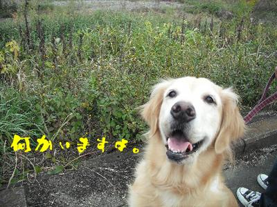永野川公園6.jpg