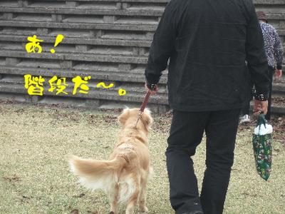 永野川公園97jpg.jpg