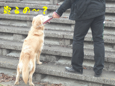 永野川公園98jpg.jpg
