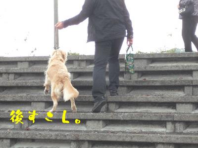 永野川公園992jpg.jpg