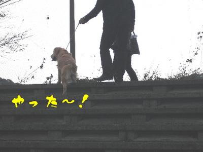 永野川公園993jpg.jpg