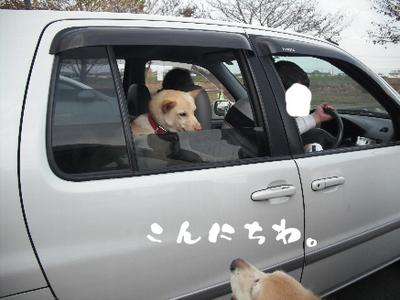 永野川公園996jpg.jpg