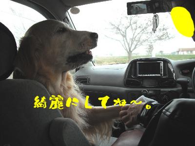 永野川公園997jpg.jpg
