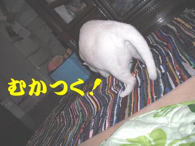 永野川公園9992jpg.jpg