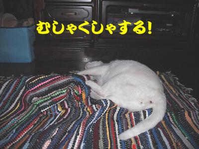 永野川公園9994jpg.jpg