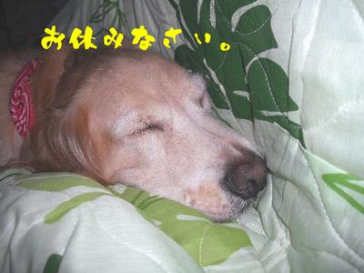 DSCFお休み1.jpg
