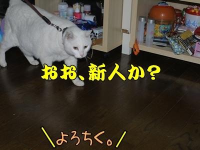 1ミッキーちゃん11.jpg