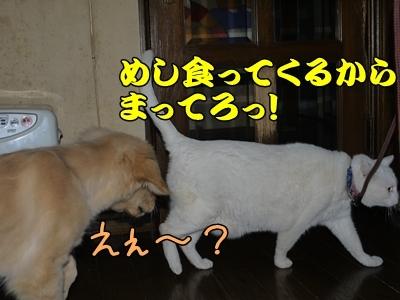 1ミッキーちゃん12.jpg